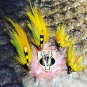 Stor Lax Hot Banana Conehead Copper Salmon Tube Flies