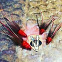 Stor Lax Legs 11 Tungsten CH Red Francis Salmon Tube Flies